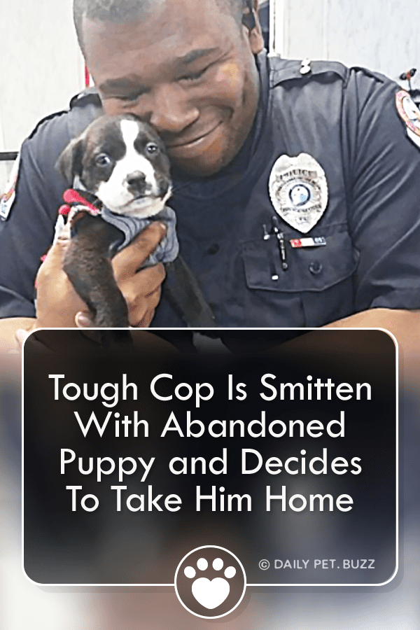 Tough Cop Falls Head Over Heels With Tiny Abandoned Puppy And Decides To Take Him Home