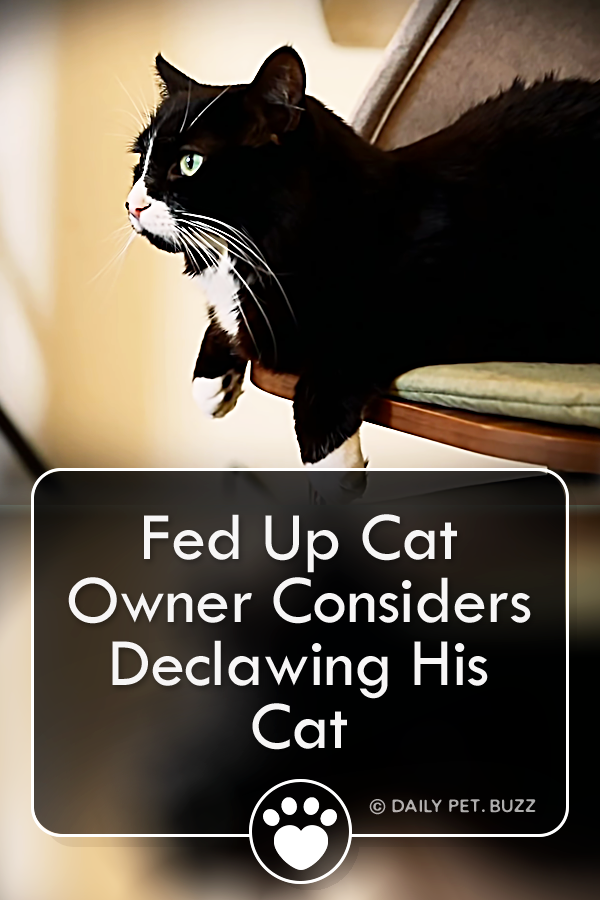 Fed Up Cat Owner Considers Declawing His Cat