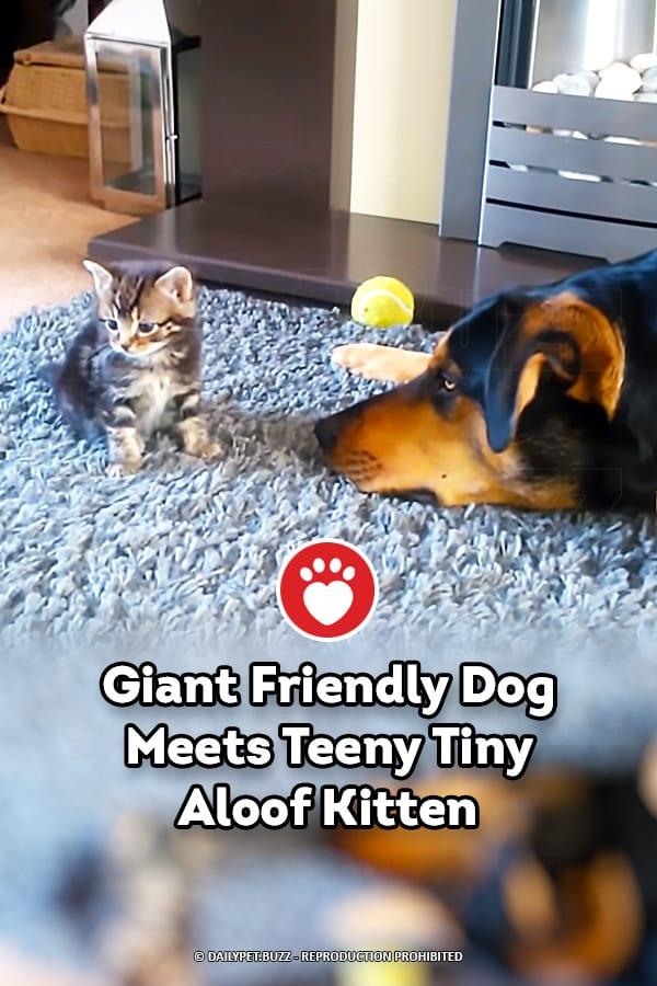 Giant Friendly Dog Meets Teeny Tiny Aloof Kitten