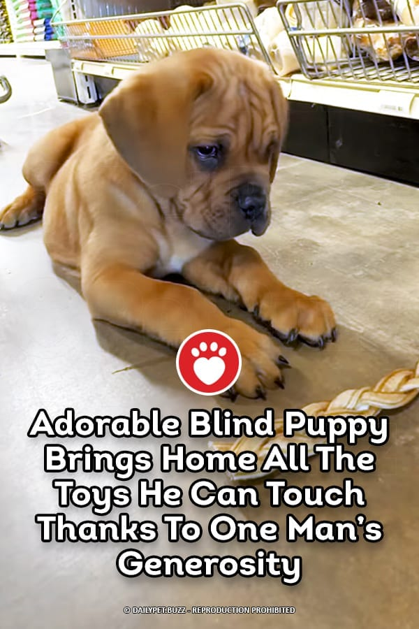 Adorable Blind Puppy Brings Home All The Toys He Can Touch Thanks To One Man's Generosity