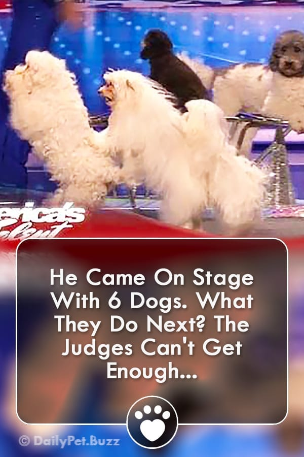 He Came On Stage With 6 Dogs. What They Do Next? The Judges Can\'t Get Enough...