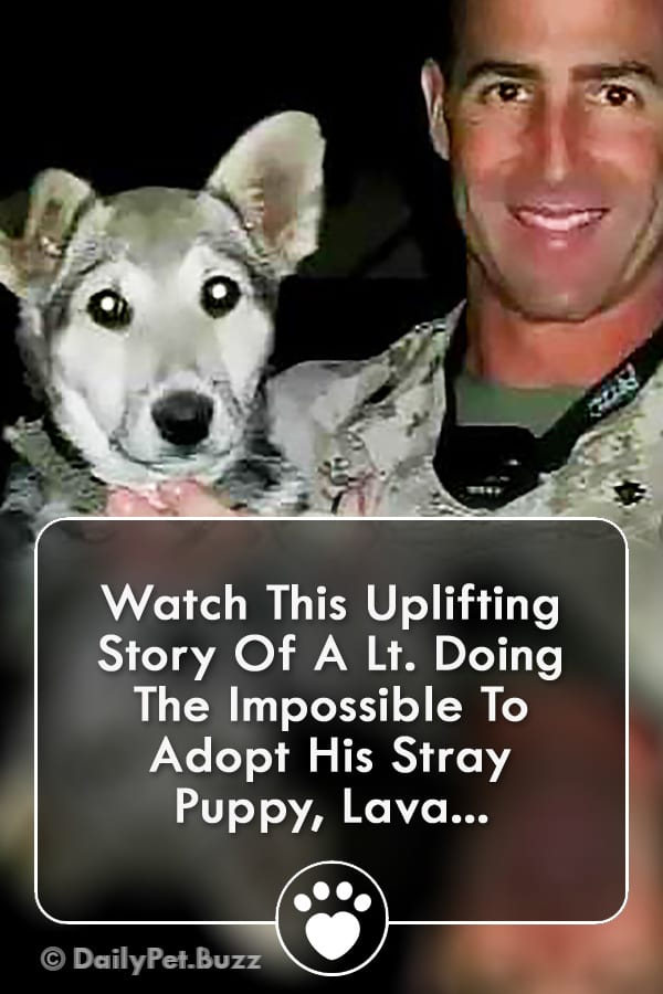 Watch This Uplifting Story Of A Lt. Doing The Impossible To Adopt His Stray Puppy, Lava...