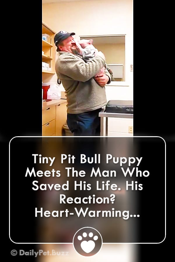 Tiny Pit Bull Puppy Meets The Man Who Saved His Life. His Reaction? Heart-Warming...
