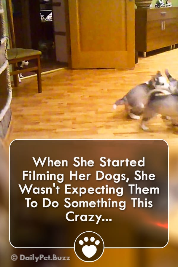 When She Started Filming Her Dogs, She Wasn\'t Expecting Them To Do Something This Crazy...